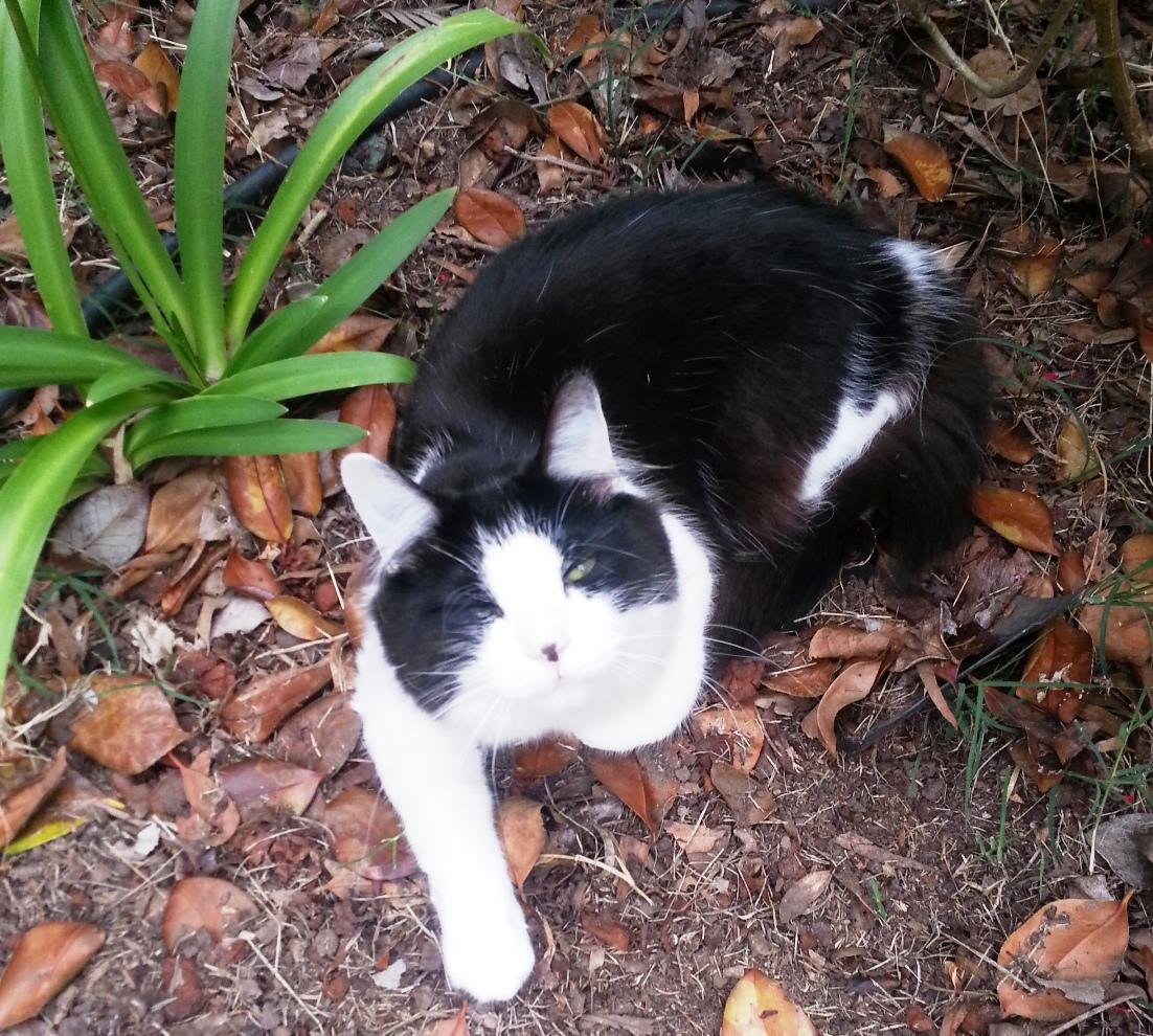 Angus cat 2yrs