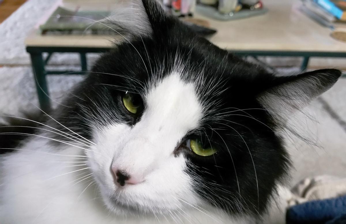 Angus, CAT!