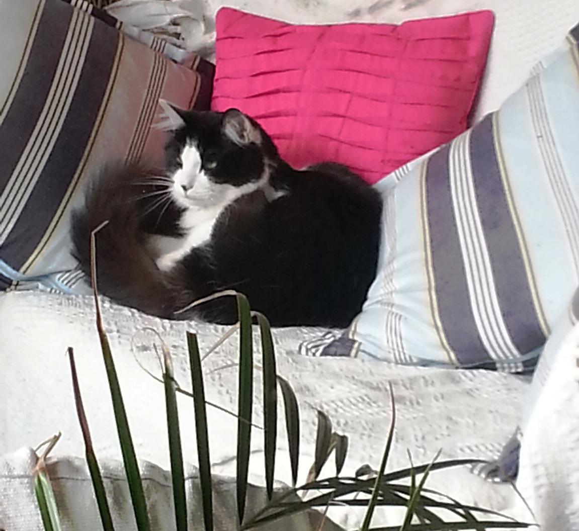 angus cat enjoying life outside